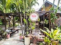Palio Koh Phangan